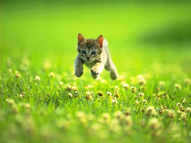 cute kitten freedom green grass spring